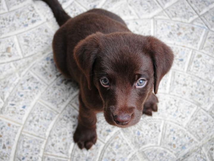 ¿Sabías que hoy es el Día Internacional del Perro?