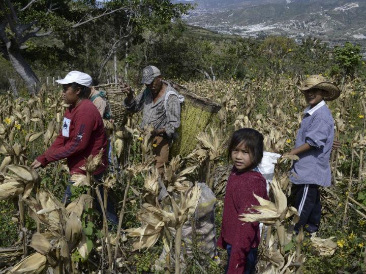 jornaleros-mexic-guerrero