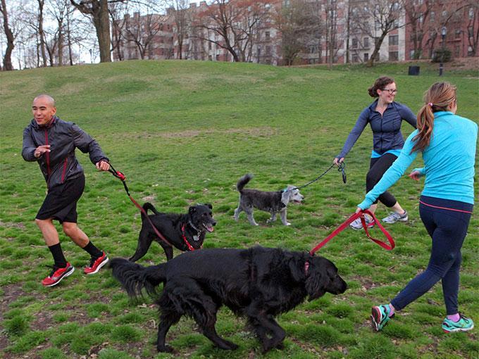 Ya no tienes que elegir entre ir al gym o pasear a tu perro