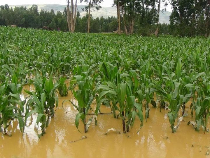 Se proyectan pérdidas enormes en materia de producción y cabezas de ganado. Foto: Sagarpa