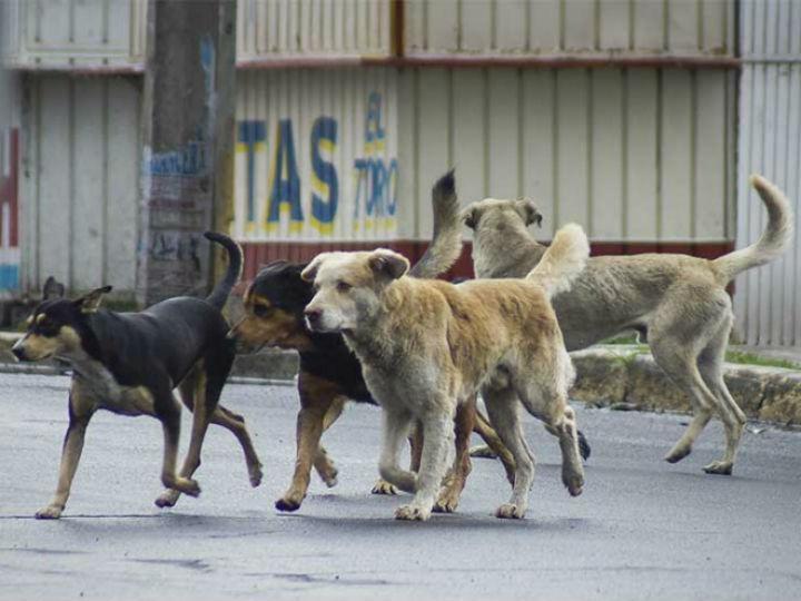 Resultado de imagen para perros callejeros