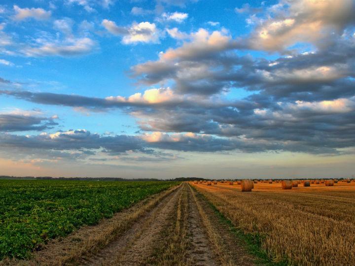 Científicos mexicanos rescatarán suelos agrícolas con tecnologías. Foto: Pixabay