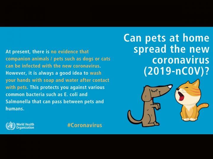 Te decimos si tu mascota puede contagiarse de coronavirus