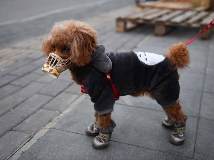 Descubren a un perro con coronavirus infectado por su dueña