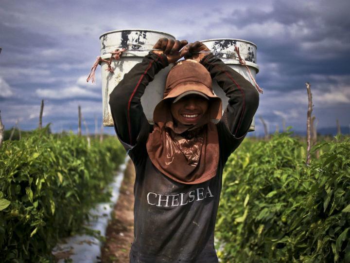 Cerca del 35 por ciento de los trabajadores jornaleros en México percibe un salario menor a 115 pesos al día. Foto: Cuartoscuro